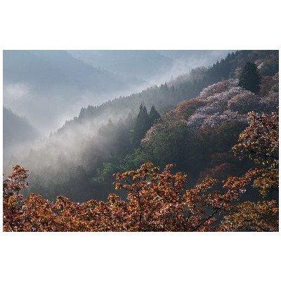 奈良県 吉野山 世界遺産 吉野山のポストカード葉書はがき Photo by絶景.com