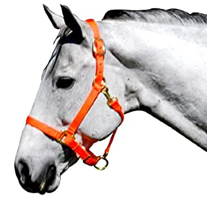 Intrepid International Nylon Horse Halter, Large, Neon orange