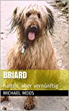 Briard: halten, aber vernünftig
