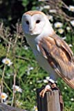 Barn Owl (Birds of the World): Blank 150 page lined journal for your thoughts, ideas, and inspiration