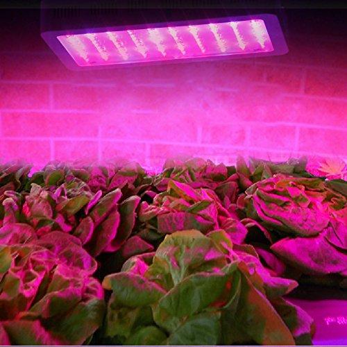 Freedancer 300W Led Grow Light Red Blue Led Lights For Plants In Garden Greenhouse