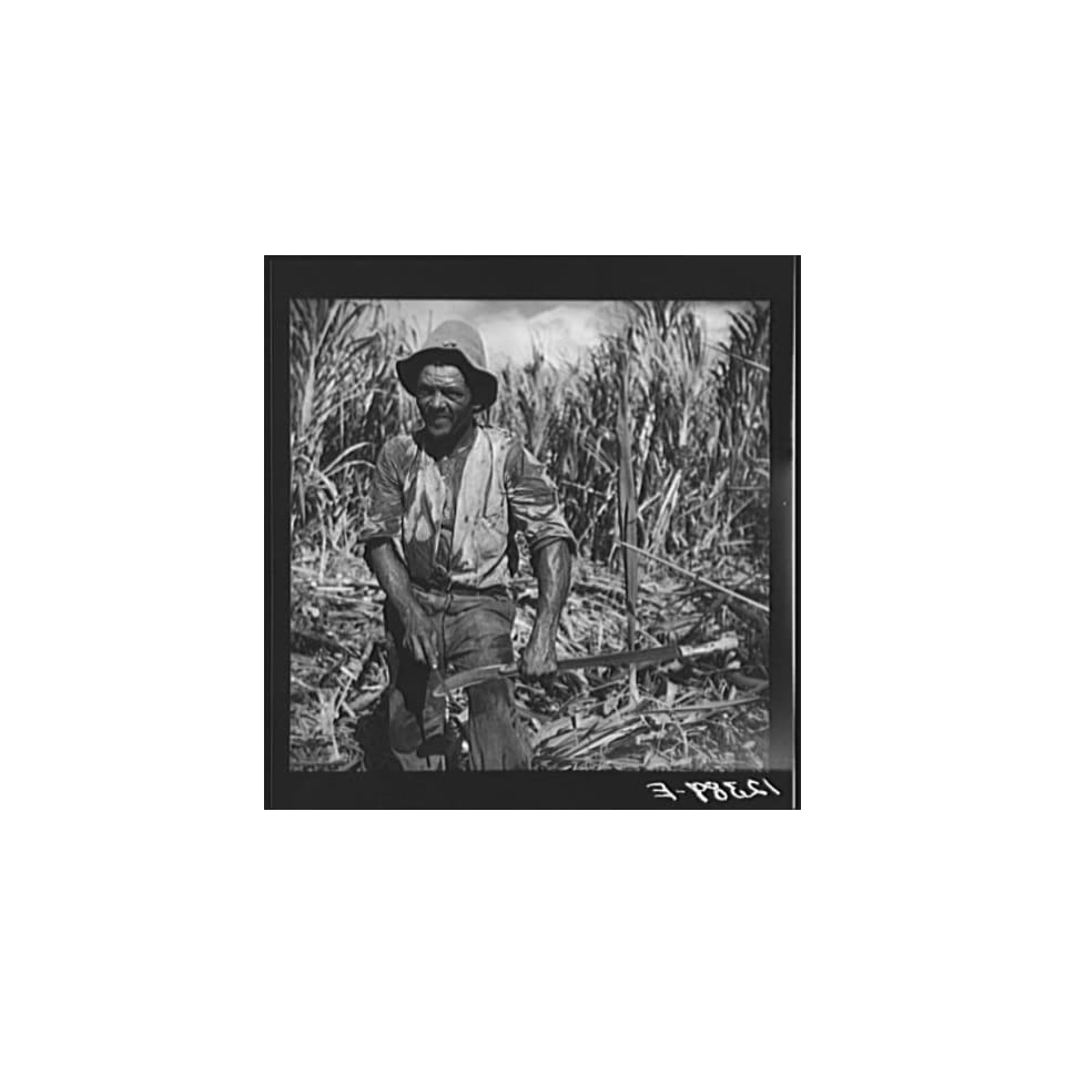 Photo Sugar worker sharpening his machete. On sugar plantation near Ponce,Puerto Rico