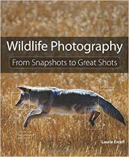 Amazon.com: Wildlife Photography: From Snapshots to Great