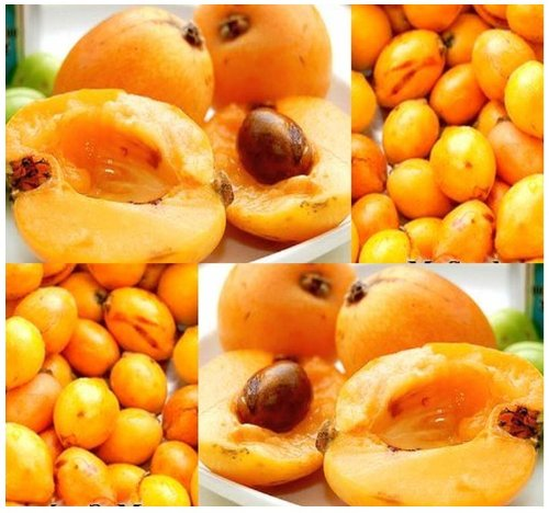 5 Loquat Eriobotrya Japonica Tree Seed Seeds Japanese Medlar Plum - High In Vitamin A - Perfect For Wine Making - Zone 8A - 11