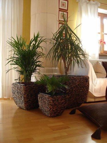 """3er Set Wasserhyazinthe Blumenkübel Übertöpfe Pflanzkübel Blumentopf """"Madras"""" braun RWB 45/35/25cm hoch"""