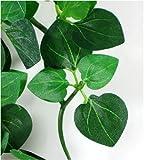Reptile Vivarium Jungle Silk Plant Amapallo Large