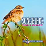 Songbirds:Field & Meadow
