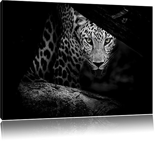curioso-cheetah-nero-bianco-dimensioni-100x70-su-tela-xxl-enormi-immagini-completamente-pagina-con-l