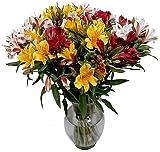 Peruvian Lilies - Long Lasting Fresh Cut Flowers - Free Fast Shipping