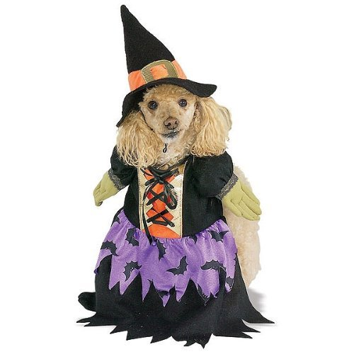 Bewitched Pet Costume