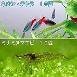 (熱帯魚)ネオンテトラ(10匹) +ミナミヌマエビ(10匹) 本州・四国限定[生体]