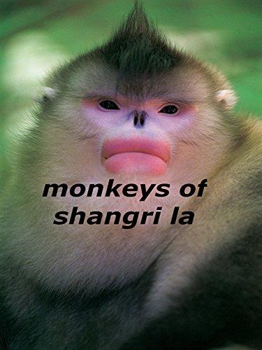 Monkeys of Shangri-La
