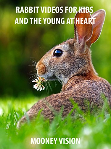 Rabbit Videos For Kids And The Young And Heart