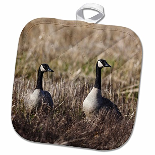 3dRose Danita Delimont - Rick A Brown - Geese - USA, Oregon, Baskett Slough NWR, pair of Canada Geese. - 8x8 Potholder (phl_191851_1)