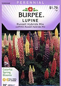 Burpee 43927 Lupine Russell Hybrids Mix Seed Packet ...