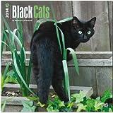 Black Cats (Multilingual Edition)