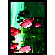 "PixTopper Poppies 01 Paper Poster(Large 44""x44"")"