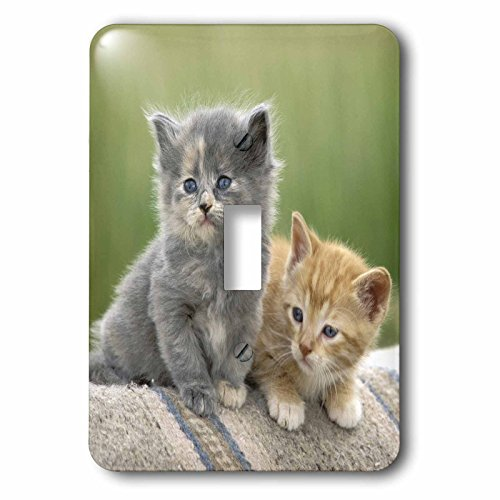 Danita Delimont - Cats - Colorado, Divide. Barn kittens, Cats - US06 BJA0193 - Jaynes Gallery - Light Switch Covers - single toggle switch (lsp_88868_1) (Kitten Pics compare prices)