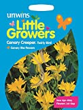Unwins Pictorial Packet - Little Growers Canary Creeper Twirly Bird - 25 Seeds