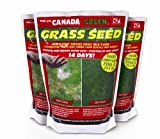 Lawn &amp; Patio - Canada Green Grass Seed, 500 Grams
