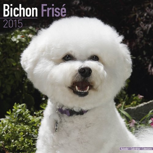 Bichon Frise Calendar - Just Bichon Frise Calendar - 2015 Wall calendars - Dog Calendars - Monthly Wall Calendar by Avonside