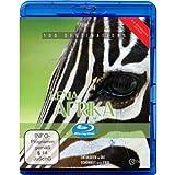 Afrika Kenia [Blu-ray]