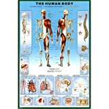 Human Body Education Poster Print, 24x36 Collections Poster Print, 24x36