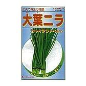 カネコ種苗 園芸・種 KS100シリーズ 大葉ニラ チャイアントベルト 野菜100 541