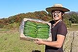 大内ファーム 農家直送 もぎたて新鮮きゅうり 5kg