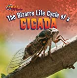 The Bizarre Life Cycle of a Cicada (Strange Life Cycles)