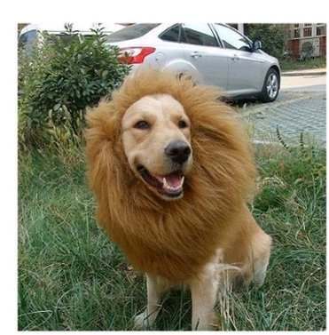 lions-mane-dog-costume