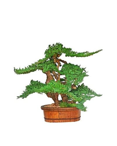 Forever Green Art Handmade Vintage Bonsai Tree As You See