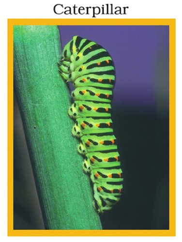 Insects - Photo Fun Activities