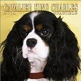 Cavalier King Charles Spaniels 2004 Calendar