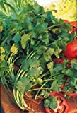 Just Seed Herb - Coriander Leisure - Coriandrum sativum Leisure' - 100 seeds Small Pack