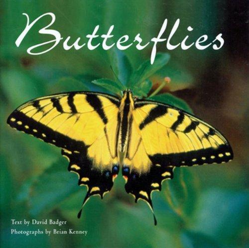 Butterflies, David Badger