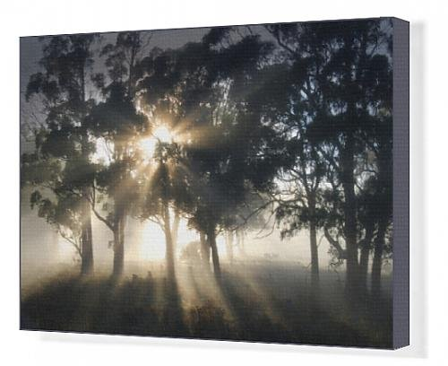 canvas-print-of-blissful-morning-near-paradise-central-tasmania-australia