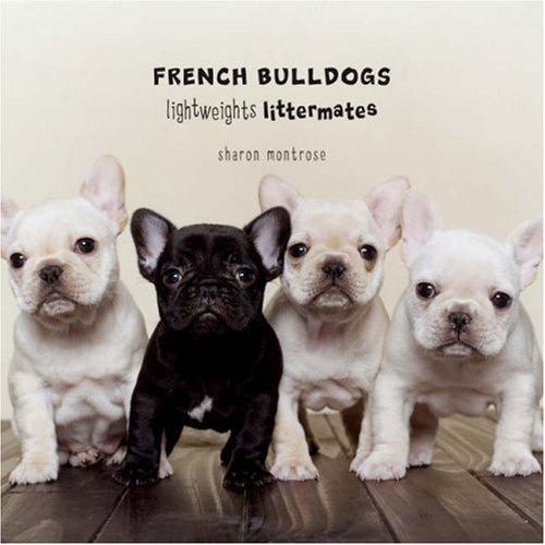 Cute French Bulldog puppy photography book