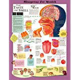 Blueprint for Health Your Taste & Smell System Chart Laminated