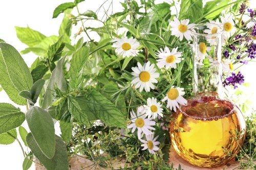 Hydrangea Oil Infusion Hydrangea Arborescens 50Ml 1.7 Oz