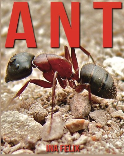 Ant: Children Book of Fun Facts & Amazing Photos on Animals in Nature - A Wonderful Ant Book for Kids aged 3-7