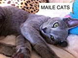 MAILE CATS ノア