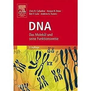 DNA: Das Molekül und seine Funktionsweise
