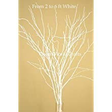 Green Floral Crafts SNOWY WHITE Birch Branches 3-6 Ft, Bulk Pack of 100
