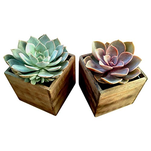 Shop Succulents Urban Living Wood Box Succulent