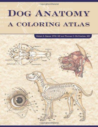 Dog Anatomy: A Coloring Atlas: A Colouring Atlas