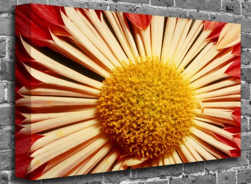 "Red and Yellow Amaryllis Flower Canvas Art Canvas Print Picture print Size: (40"" x 26"")"