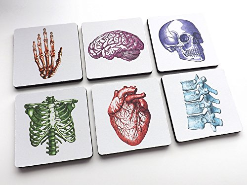 Human Body Coasters 3.5 inch color skull anatomical heart skeleton male nurse gift (Tabletop Skeleton compare prices)