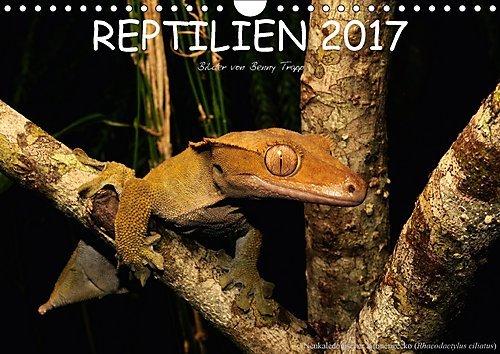 reptilien-wandkalender-2017-din-a4-quer-reptilien-aus-aller-welt-monatskalender-14-seiten-calvendo-t