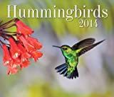 img - for Hummingbirds 2014 book / textbook / text book